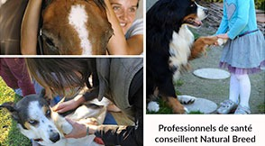 Veterinary, osteopath, acupuncturist